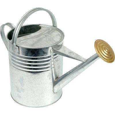 Galvanised watering can with a silver finish sporting a gold coloured sprinkler.