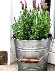 galvanised bucket garden planter